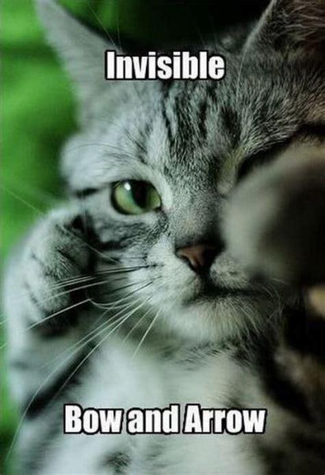 images  funny cat captions quotations