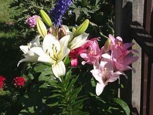 Blumen Im Juli : blumen 2006 sommer ~ Lizthompson.info Haus und Dekorationen