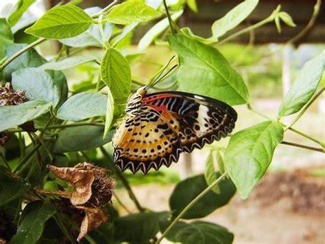Botanischer Garten Leipzig Schmetterlingshaus öffnungszeiten by Botanischer Garten Leipzig Schmetterlingshaus
