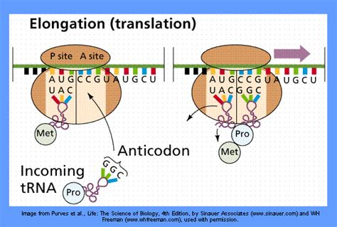 Protein Synthesis. Physician Assistant Jobs In Texas. Stomach Procedures To Lose Weight. Can Alternative Medicine Cure Cancer. Continuing Education Certificate Programs. Developer Windows Phone Credit Card Debt Free. What Is Public Liability Insurance. Best Ftp Server Software Geico Sr22 Insurance. What Is Annuity Insurance Tax Return Georgia