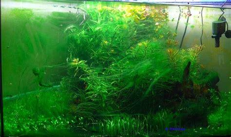 les algues d eau douce aquariums de v 233 ronique