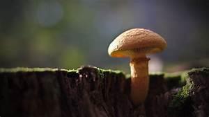 A  U2018potentially Deadly U2019 Mushroom