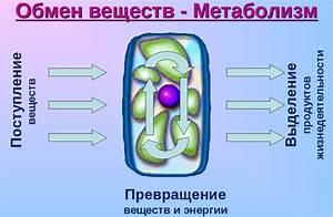 Лекарственные препараты ускоряющие обмен веществ для похудения