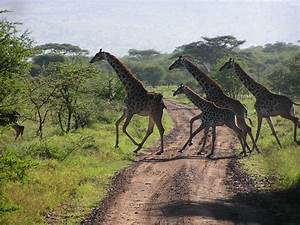 I LOVE TANZANIA -THE LAND OF KILIMANJARAO -SERENGETI AND ...