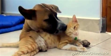 dogs annoying cats   friendship