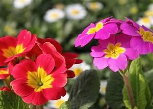 Welche Blumen Kann Man Essen : deko ideen essbare blumen f r torten salate und ~ Watch28wear.com Haus und Dekorationen