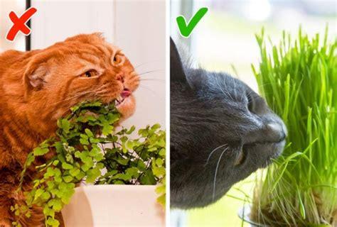 7 kaķu paradumi, kuriem īpašnieki bieži izdabā un neapzināti kaitē mājdzīvnieku veselībai ...