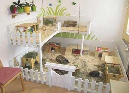 amazing diy guinea pig cage ideas
