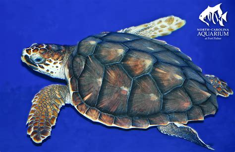 Images Of Turtles Lesson Plans By Steam Subject Sea Turtle Exploration