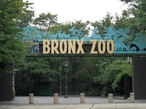 bronx zoo information desk
