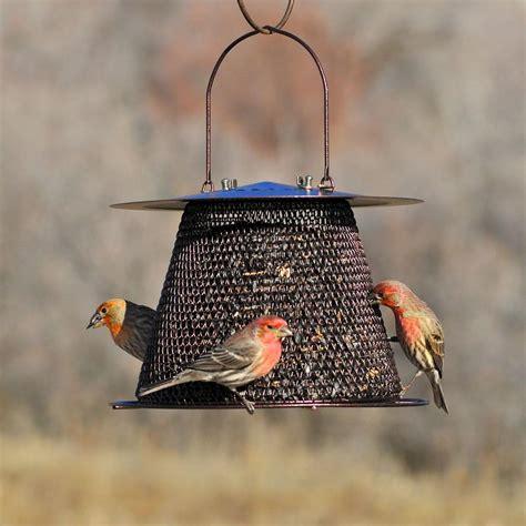amazon com no no bronze original bird feeder bz00324