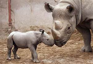 T0P 10 MOST ENDANGERED AFRICAN WILDLIFE – TOP 10 AFRICA