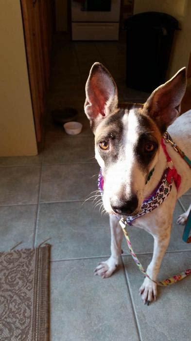 Sara Available For Adoption With Freedom Dog Rescue Kanata
