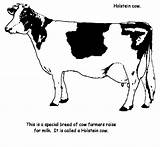 Cow Coloring Printable Crafts Fun sketch template