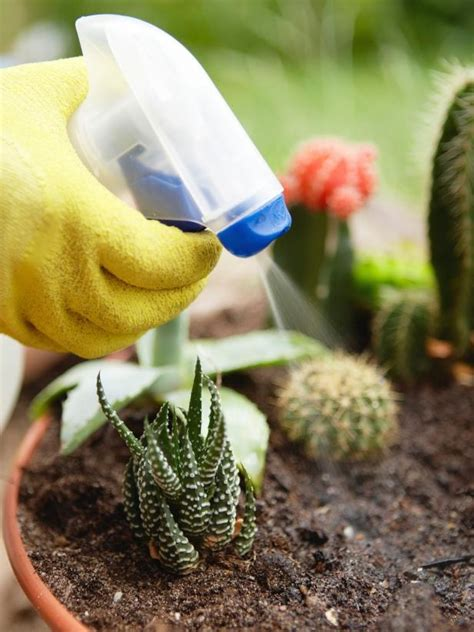 mewarnai gambar bunga kaktus