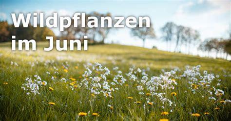 Wann Kräuter Ernten by Wildpflanzen Erntekalender Kr 228 Uter B 228 Ume Obst Mehr