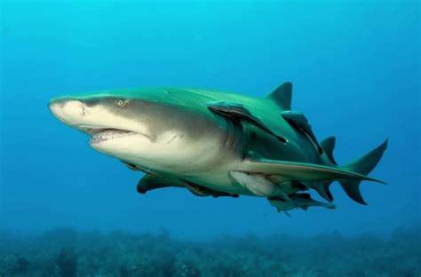 top   dangerous sharks boredbug
