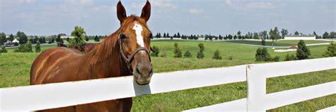 things lexington horse kentucky ten capital