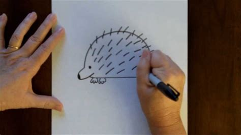 draw  cartoon porcupine simple drawing lesson