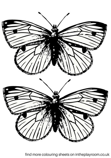 printable coloring pictures free printable butterfly colouring pages in the playroom