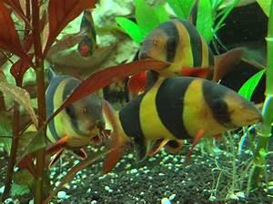 Was Fressen Schnecken : schnecken im aquarium 4 wirklich wirksame gegenmittel ~ Orissabook.com Haus und Dekorationen