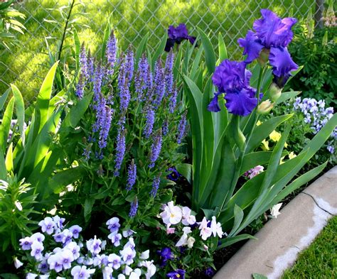 using bearded iris in your landscape sowing the seeds