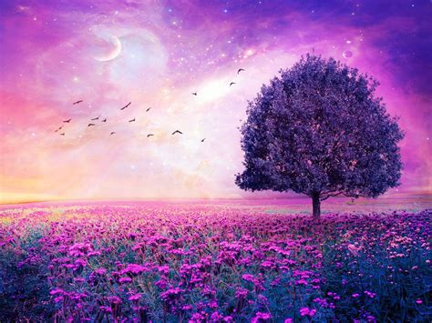 Wallpaper Of Desktop by Purple Flowers Field Tree Hd Wallpapers High