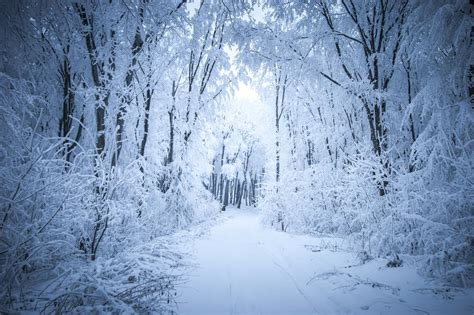 Kate Frozen snow forest road winter backdrop Snow forest