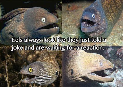 Bad Joke Eel Meme - funny eel memes 12 pics izismile com