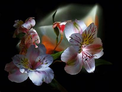 Flowers Animated