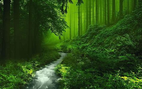 green forest wallpaper beautiful forest hd image live hd wallpaper hq pictures Beautiful