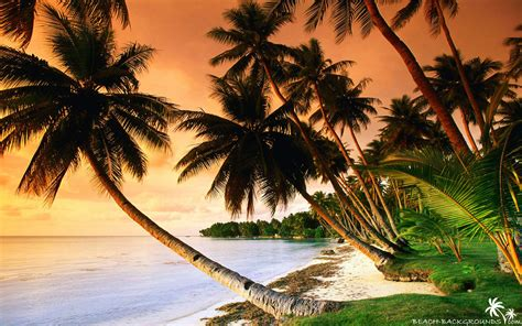 No one can resist the blue sea, soft sand, and the carefree atmosphere. Beautiful beach palm trees on sunset - Beach Wallpapers