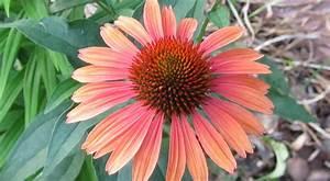 Central Virginia Organic Gardener  Flower Anatomy Class