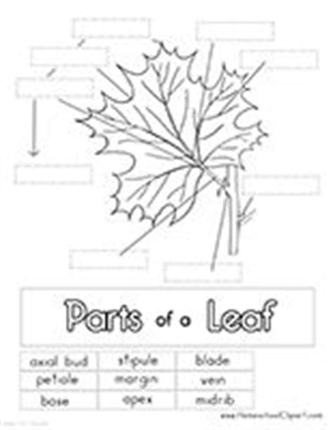 Leaf Anatomy Coloring Key by 86 Best Images About Plant Anatomy On Vascular