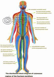All Meridian Channels In Body