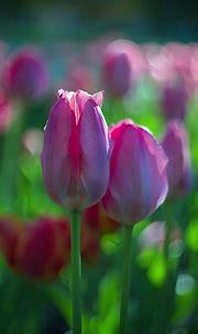 Pin by Angi on I L O V E... | Petal on the wind, Flowers ...