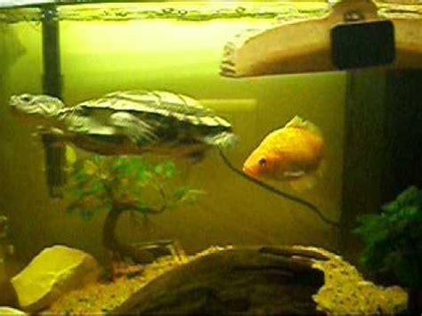 tortue avec poisson 001 mov