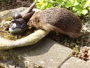 Wat eten egels in de tuin