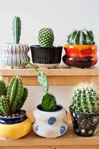 Mini Succulente Pas Cher : petit cactus pas cher ~ Teatrodelosmanantiales.com Idées de Décoration