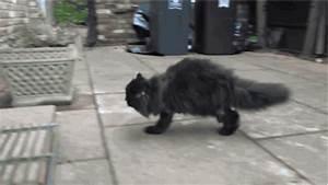 - Le Théâtre de mon Cerveau -: The One-side Cat Who Walks ...