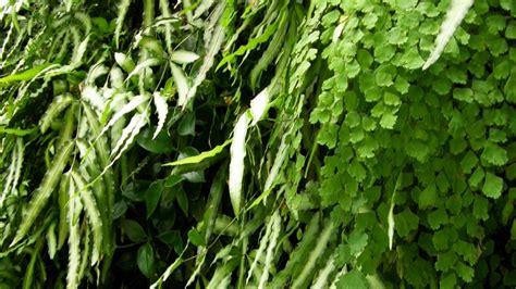 Green Wall | Longwood Gardens