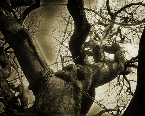 The Chained Oak by steelgohst on DeviantArt