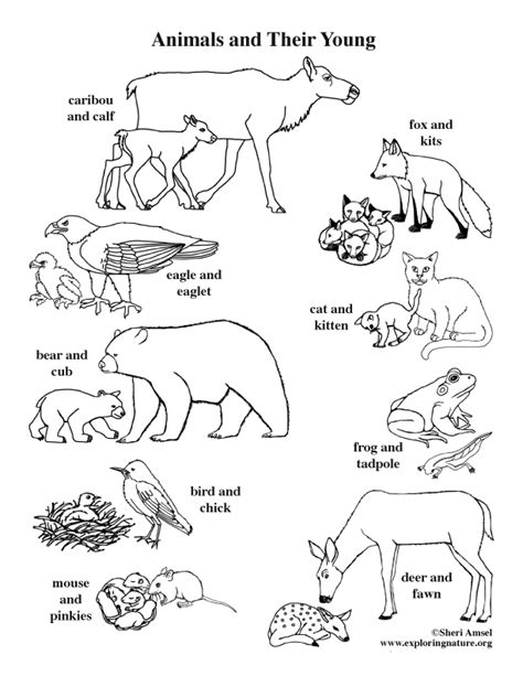 animals   young coloring page