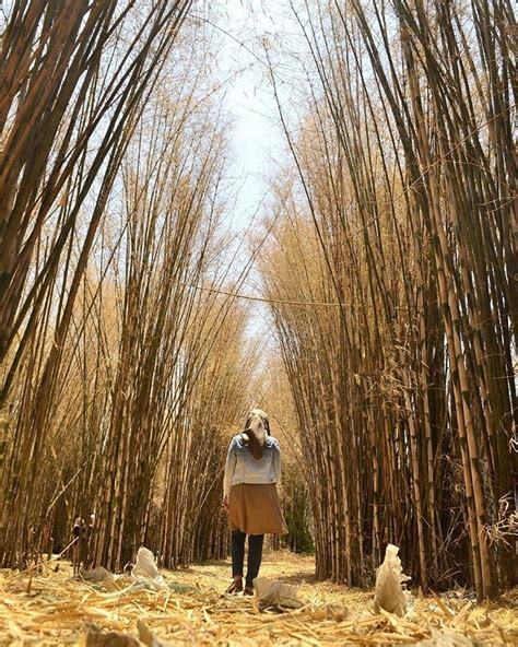 rute  harga tiket masuk hutan bambu keputih spot