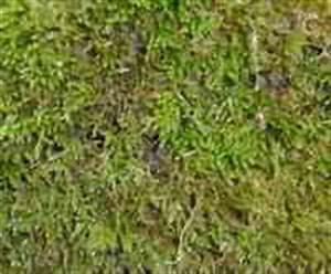 Moos Im Rasen Beseitigen : rollrasen rasensprenger fertigrasen motorrasenm her ~ Lizthompson.info Haus und Dekorationen