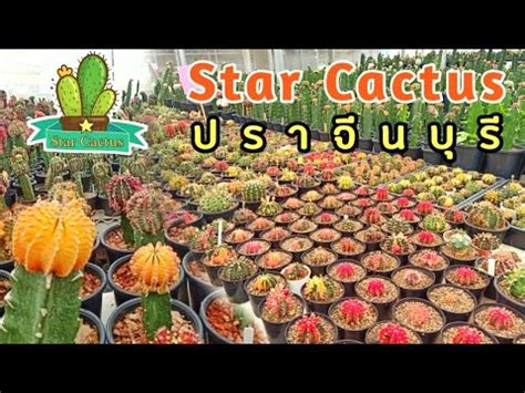 สวนแคคตัส ปราจีนบุรี Star Cactus - YouTube