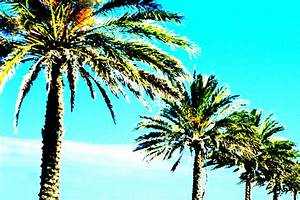 Palm Trees - Cliparts.co