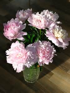 file bouquet of peonies 12 jpg wikimedia commons