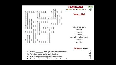 cc circulatory digestive reproductive systems crossword mini  youtube