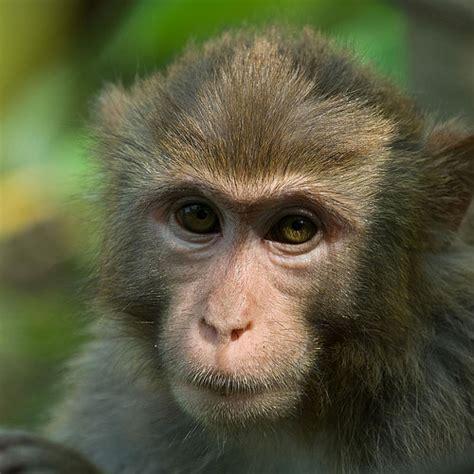 Twelve Monkeys Resume by Cover Letter Objectives Choice Image Resume Cover Letter Exle Of Resume Cover Letter Sle